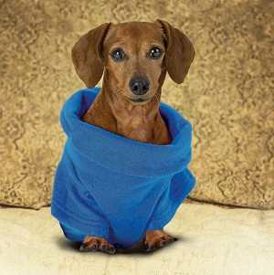 fashion-week-dog-snuggie
